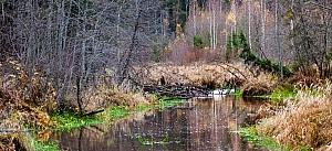 река Святичка Галичский район